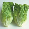 Lettuce Little Gem (Cos)