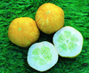 Cucumber Crystal Lemon naturally nurtured seed