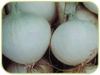 Onion Musona White Italian naturally nurtured seed