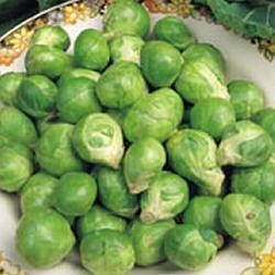 BRUSSELS_SPROUTS_EVESHAM_SPECIAL