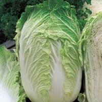 Chinese Cabbage & Broccoli
