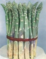 Asparagus Vegetable Seeds