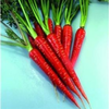 Carrot Red Samurai F1