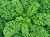Kale Westland Winter naturally nurtured seed