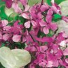 Honesty Lunaria Annua Crown Blend Mixture