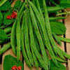 Runner Bean Scarlet Empire