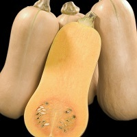 2020 Squash British Butternut Best Buy