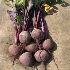 Beetroot_Boltardy